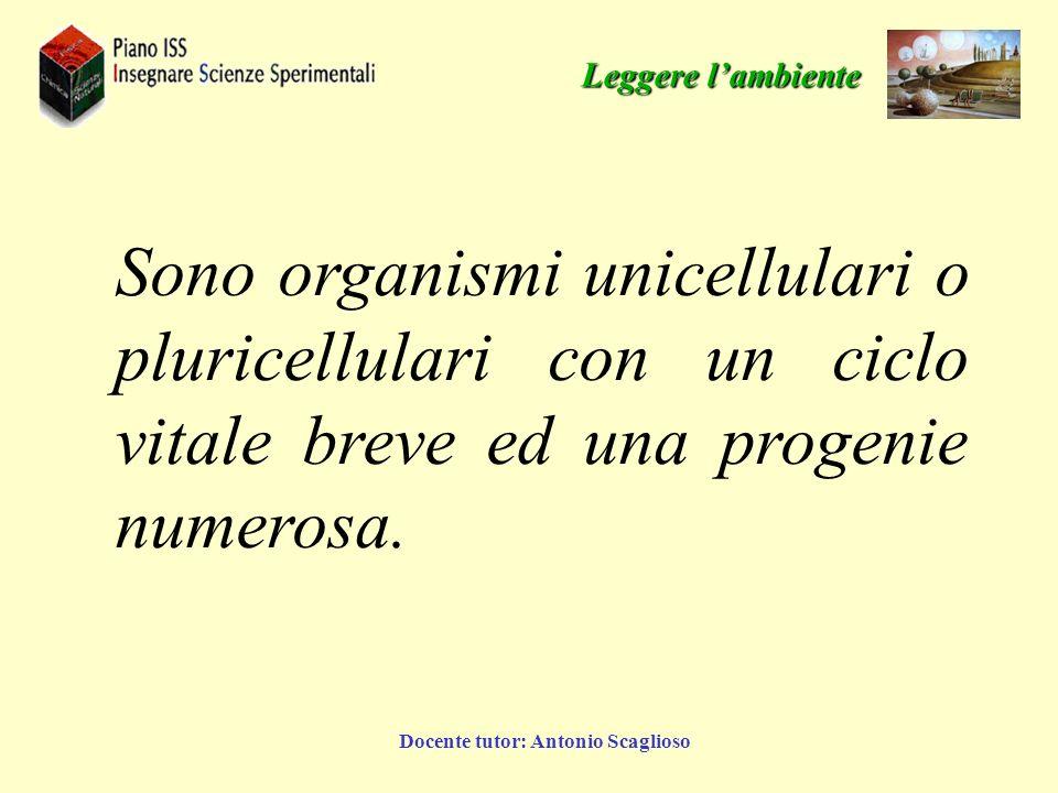 Docente tutor: Antonio Scaglioso