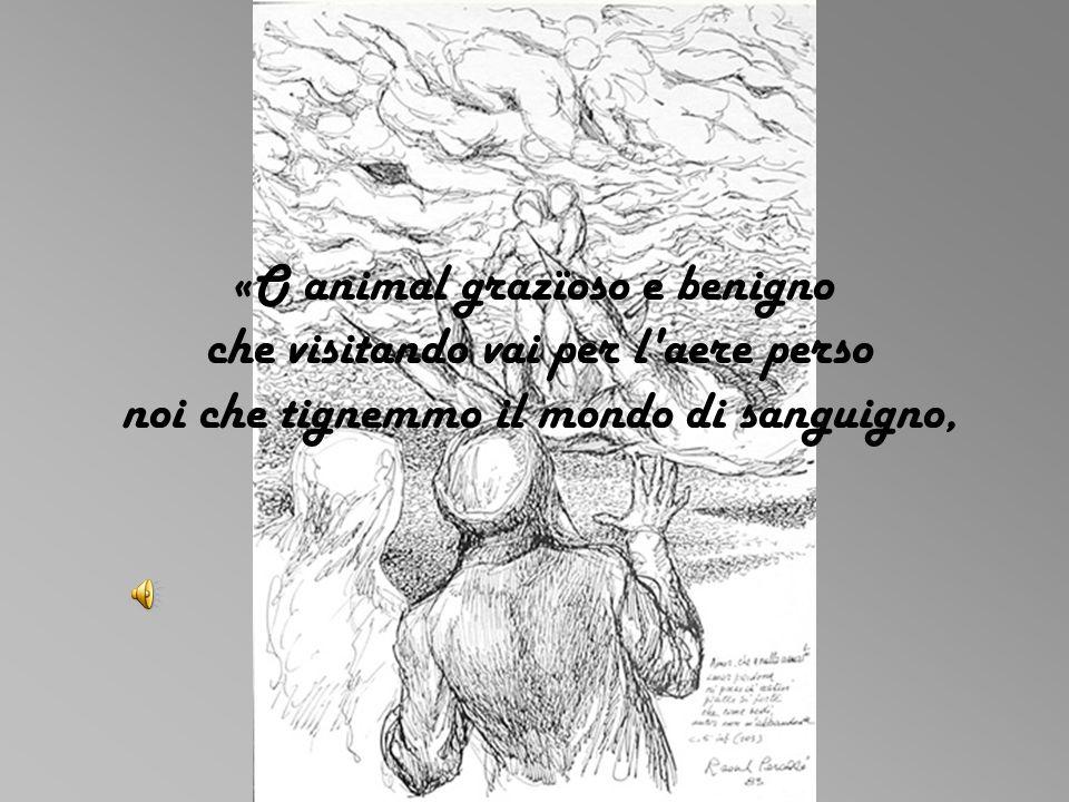 «O animal grazïoso e benigno che visitando vai per l aere perso noi che tignemmo il mondo di sanguigno,