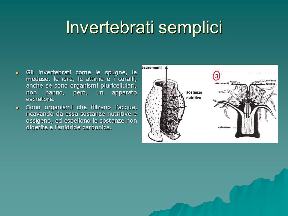 Invertebrati semplici