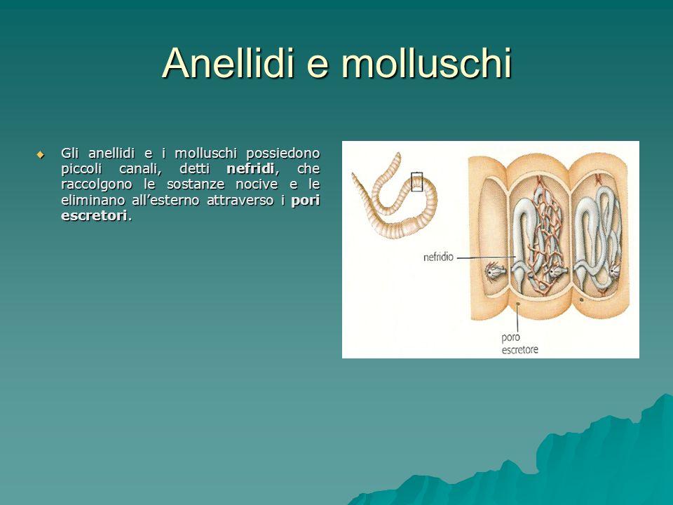 Anellidi e molluschi