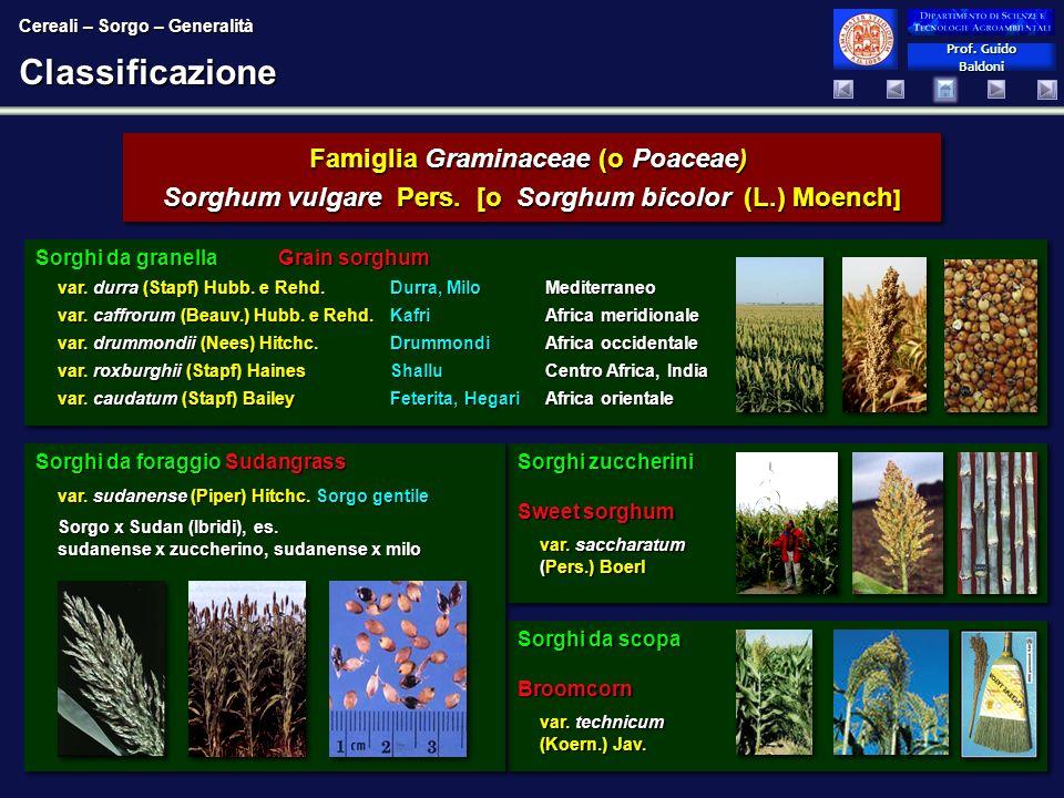 Classificazione Famiglia Graminaceae (o Poaceae)