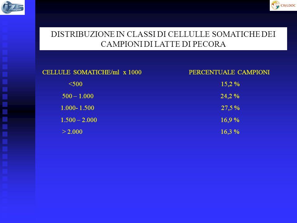 DISTRIBUZIONE IN CLASSI DI CELLULLE SOMATICHE DEI CAMPIONI DI LATTE DI PECORA