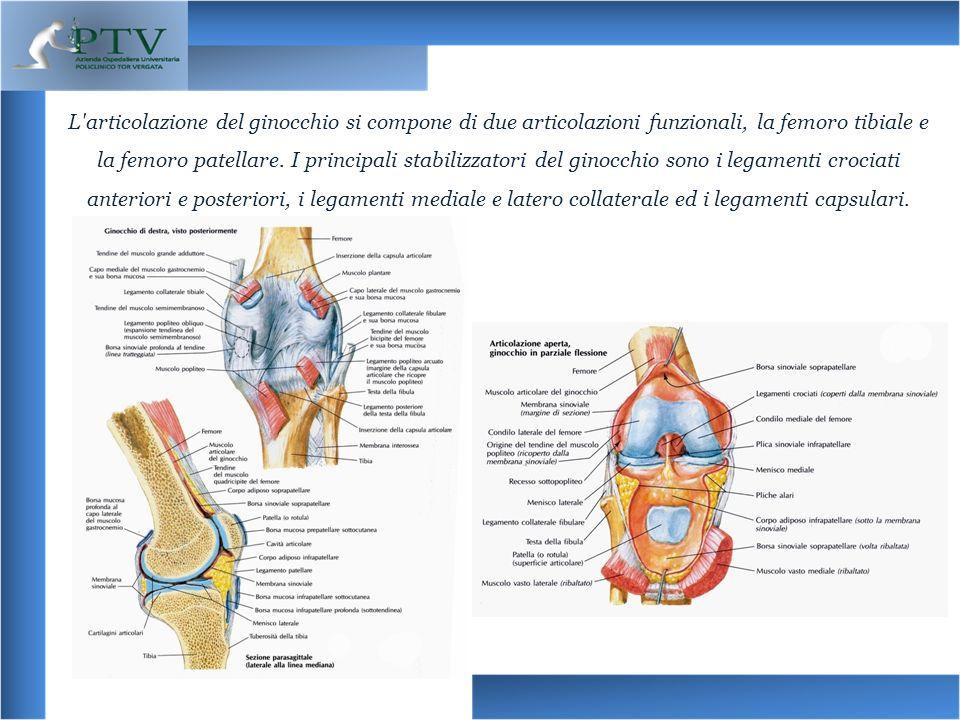 L articolazione del ginocchio si compone di due articolazioni funzionali, la femoro tibiale e la femoro patellare.