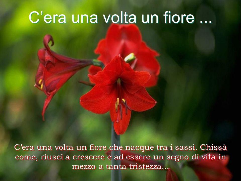 C'era una volta un fiore ...
