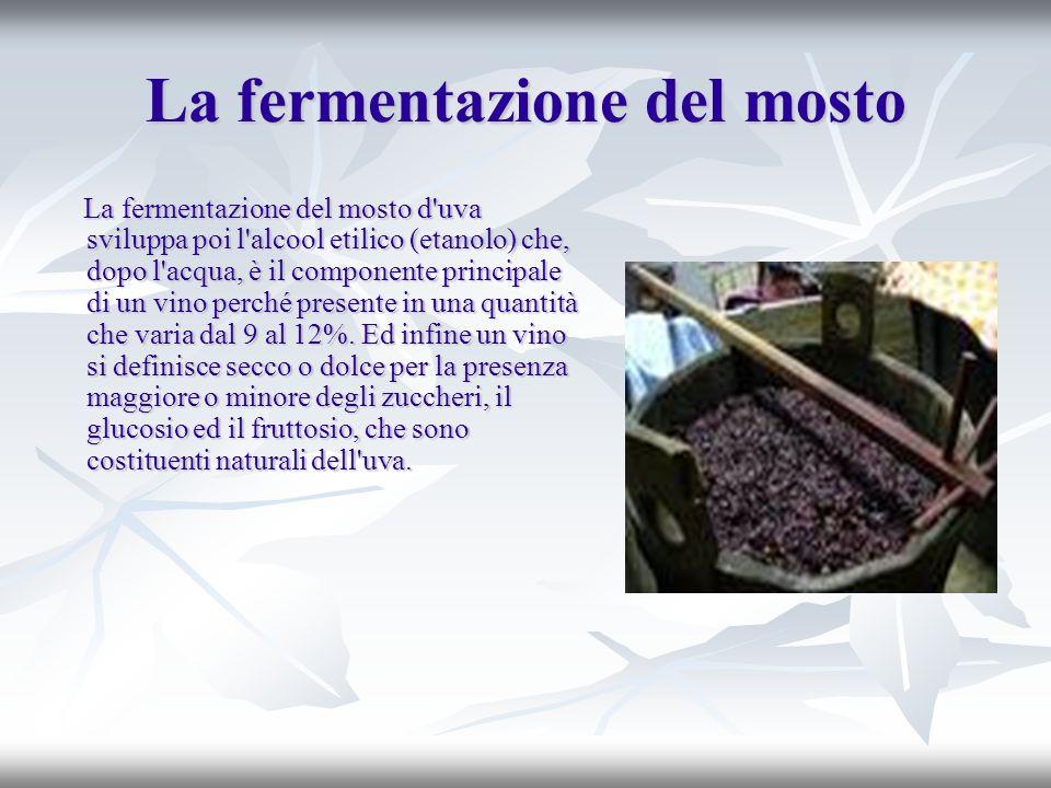 La fermentazione del mosto