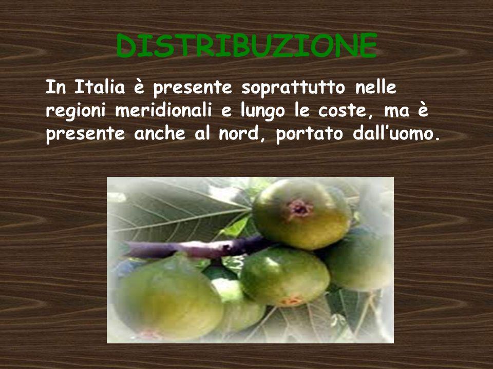 DISTRIBUZIONE In Italia è presente soprattutto nelle regioni meridionali e lungo le coste, ma è presente anche al nord, portato dall'uomo.