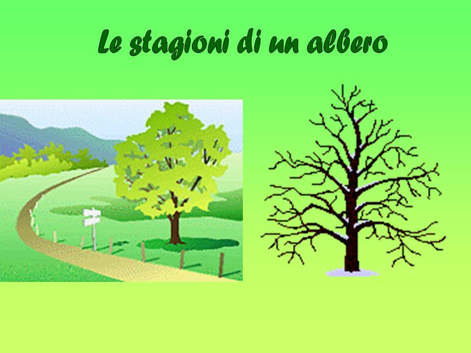 Le stagioni di un albero