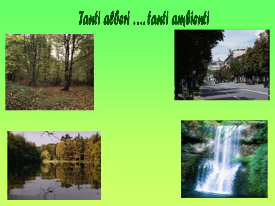 Tanti alberi …. tanti ambienti