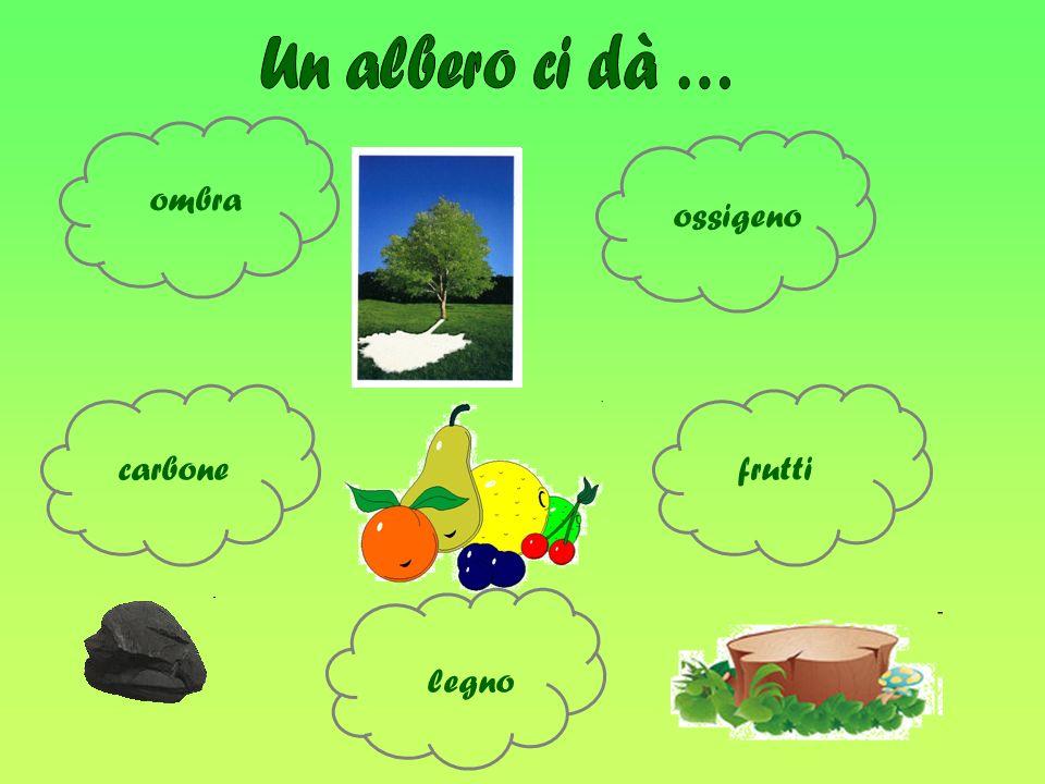 Un albero ci dà … ombra ossigeno carbone frutti legno