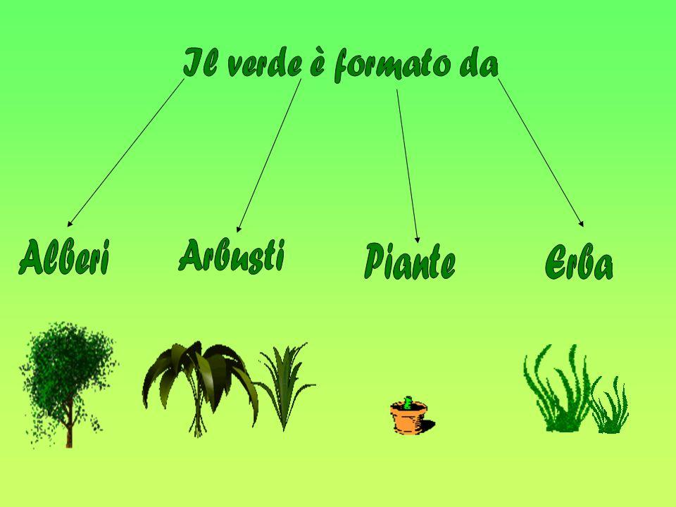 Il verde è formato da Alberi Arbusti Piante Erba