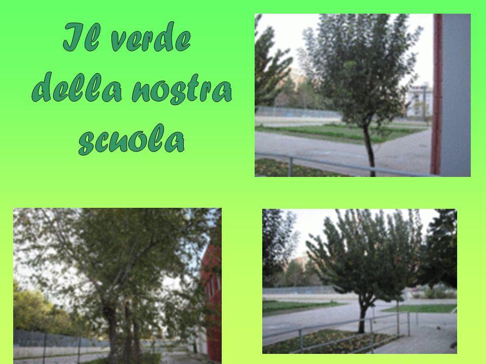 Il verde della nostra scuola