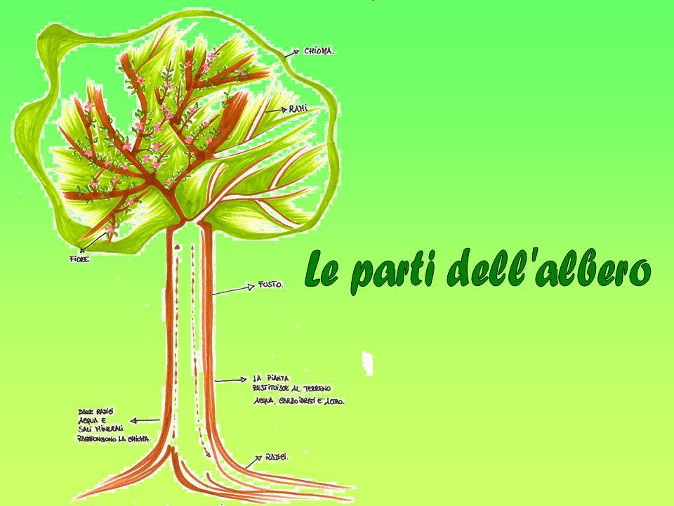 Le parti dell albero
