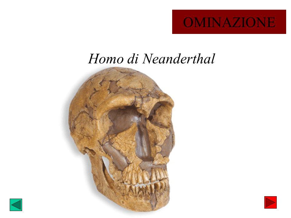 OMINAZIONE Homo di Neanderthal