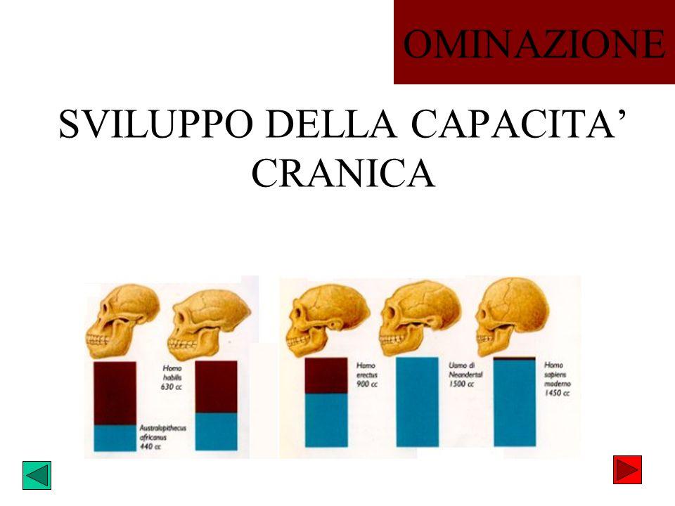 SVILUPPO DELLA CAPACITA' CRANICA