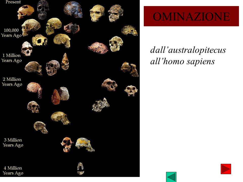 OMINAZIONE dall'australopitecus all'homo sapiens