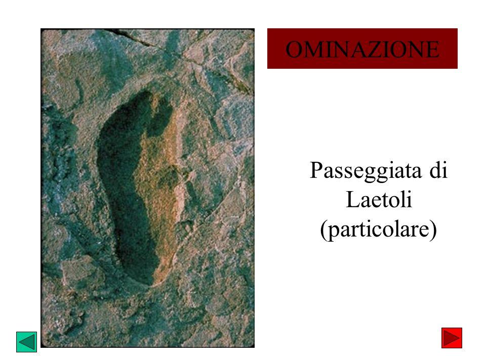 Passeggiata di Laetoli (particolare)