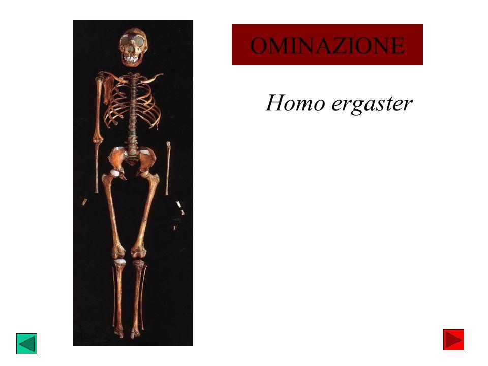 OMINAZIONE Homo ergaster