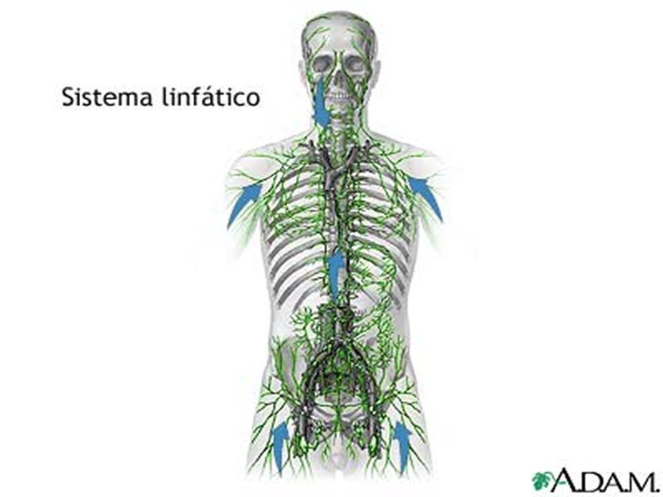 Difesa immunitaria La linfa e il sistema linfatico