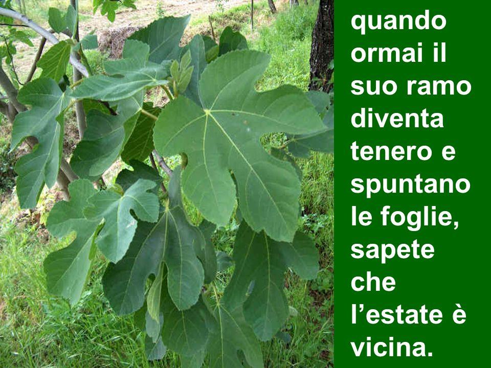 quando ormai il suo ramo diventa tenero e spuntano le foglie, sapete che l'estate è vicina.