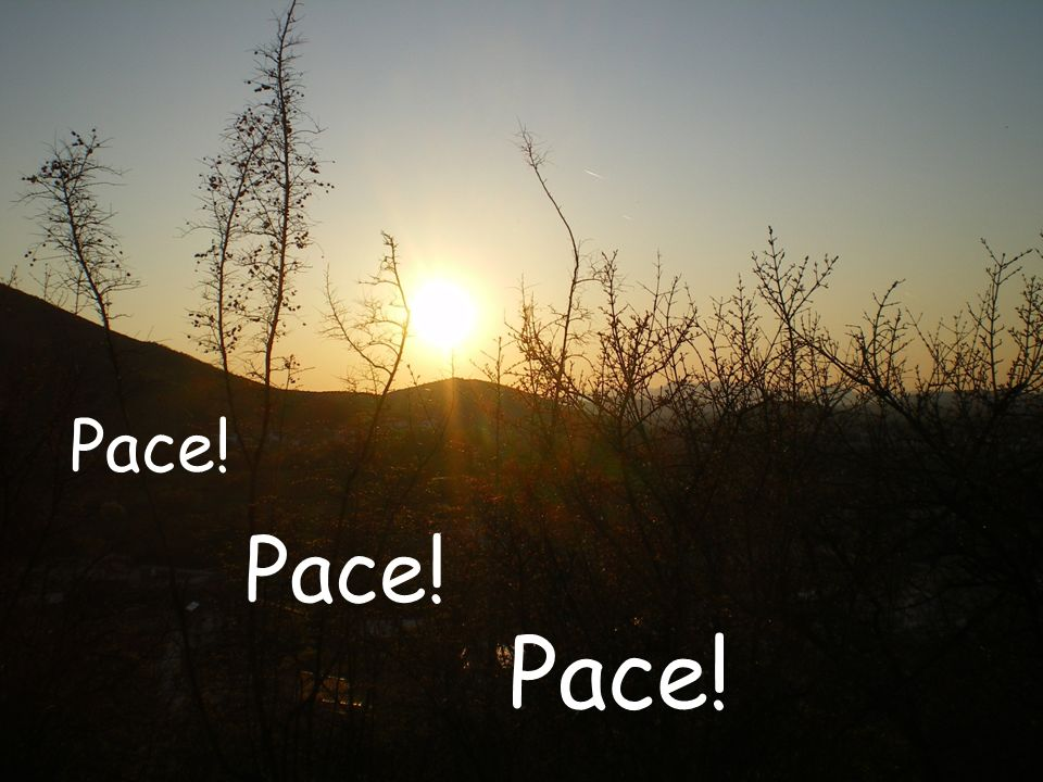 Pace! Pace! Pace!