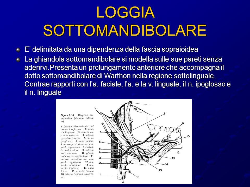 LOGGIA SOTTOMANDIBOLARE
