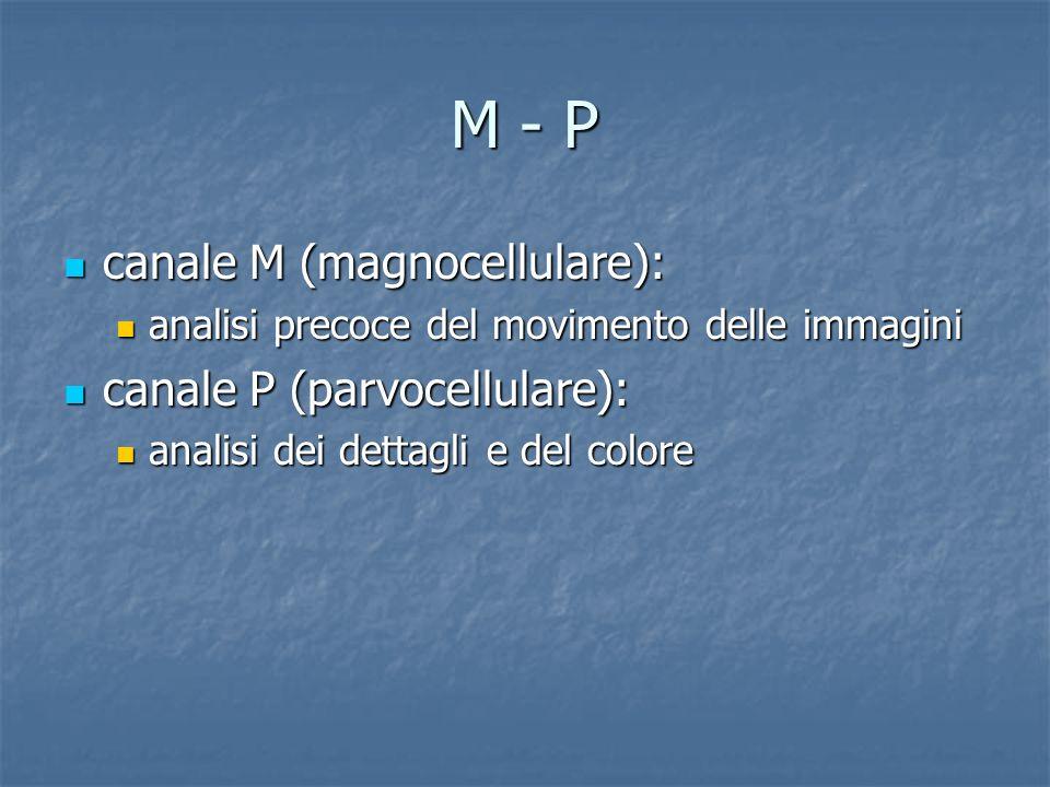 M - P canale M (magnocellulare): canale P (parvocellulare):