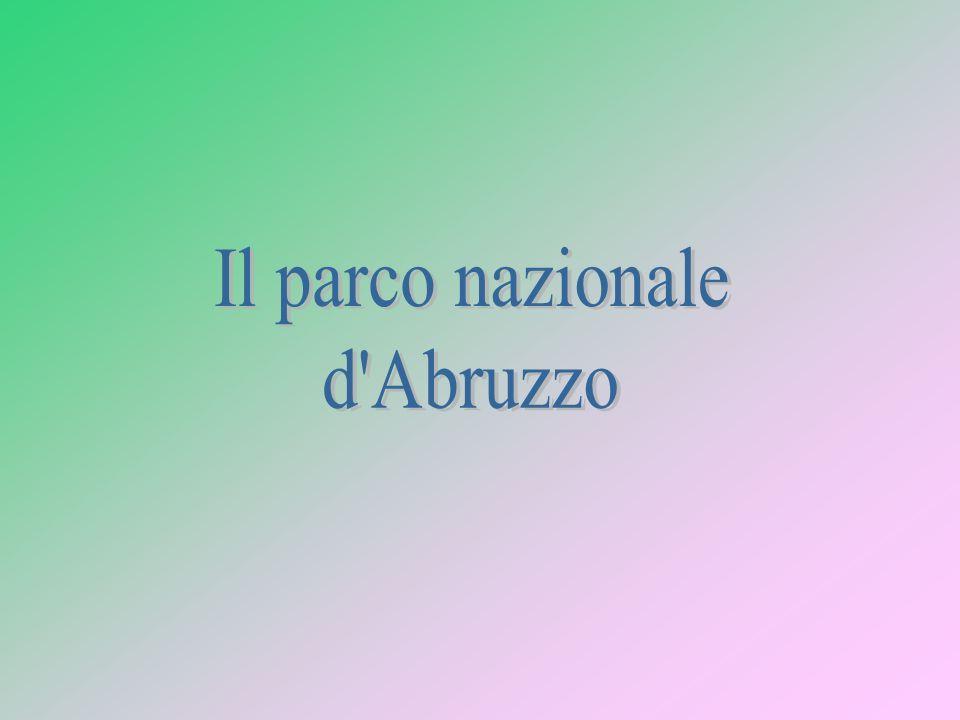 Il parco nazionale d Abruzzo
