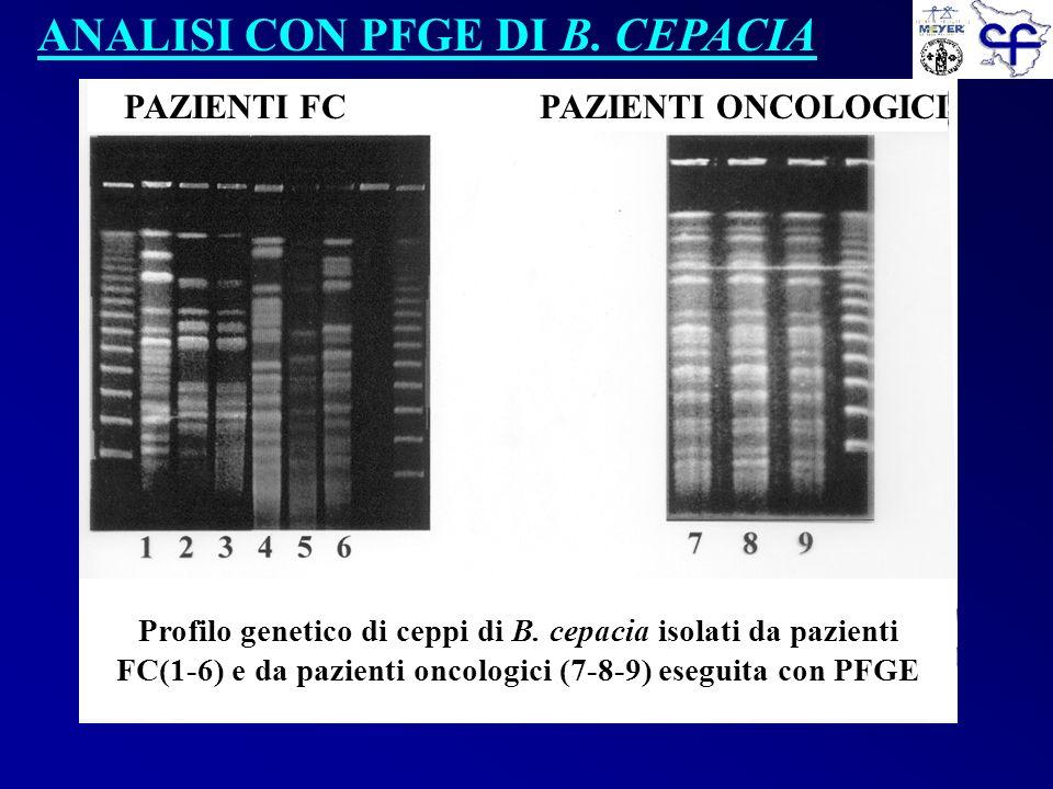 ANALISI CON PFGE DI B. CEPACIA