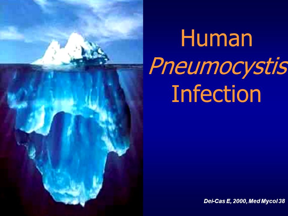 Human Pneumocystis Infection Dei-Cas E, 2000, Med Mycol 38 In short,