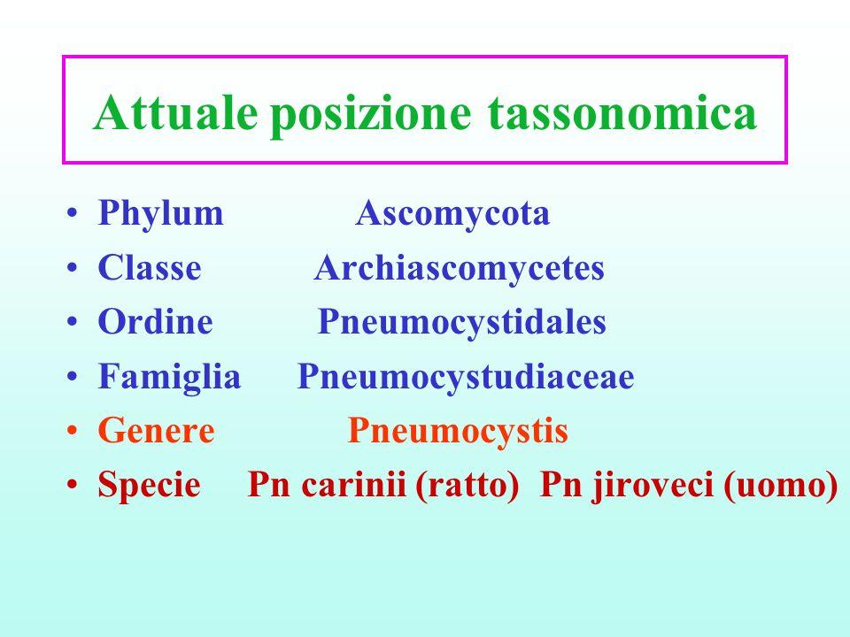 Attuale posizione tassonomica