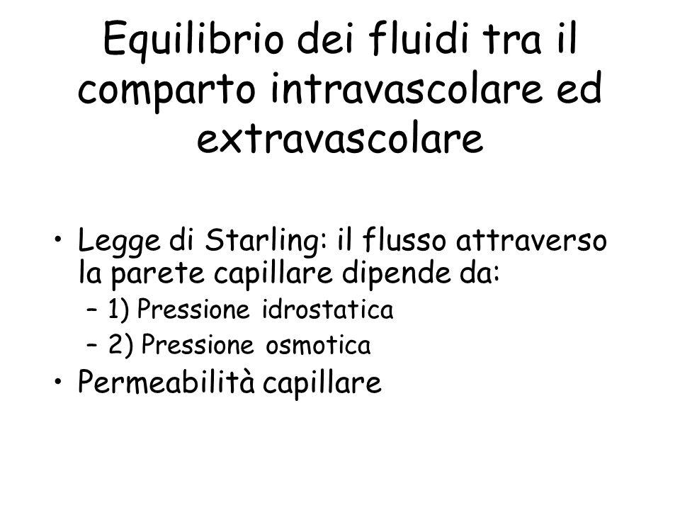 Equilibrio dei fluidi tra il comparto intravascolare ed extravascolare