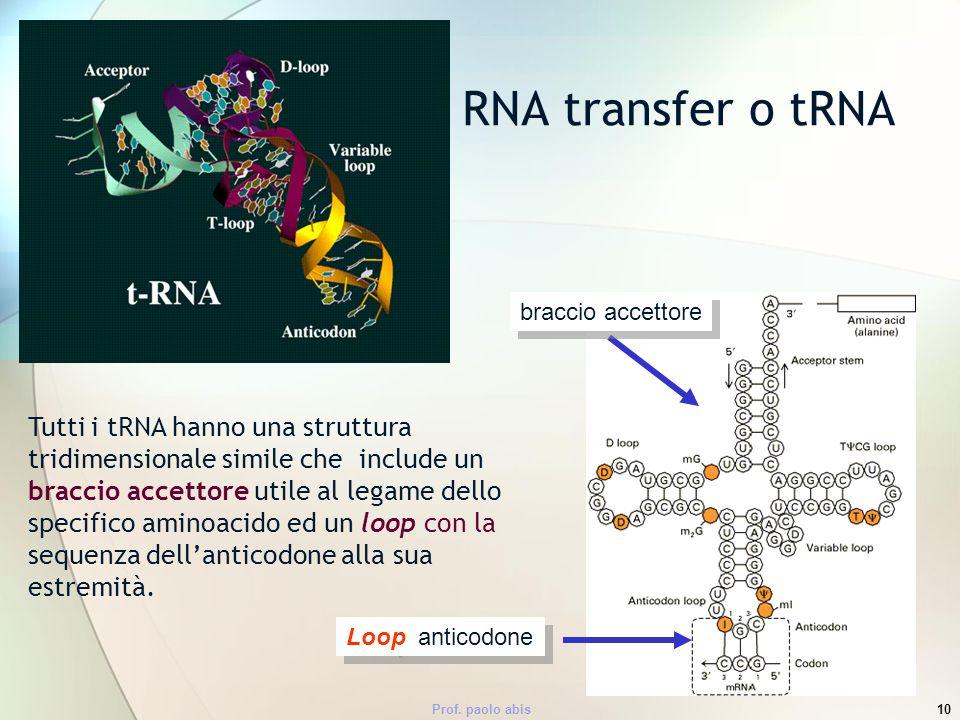 RNA transfer o tRNA braccio accettore.