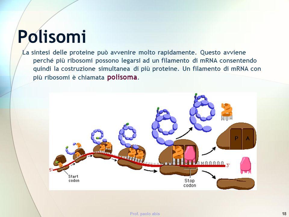 Polisomi