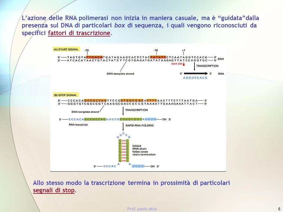 L'azione delle RNA polimerasi non inizia in maniera casuale, ma è guidata dalla presenza sul DNA di particolari box di sequenza, i quali vengono riconosciuti da specifici fattori di trascrizione.