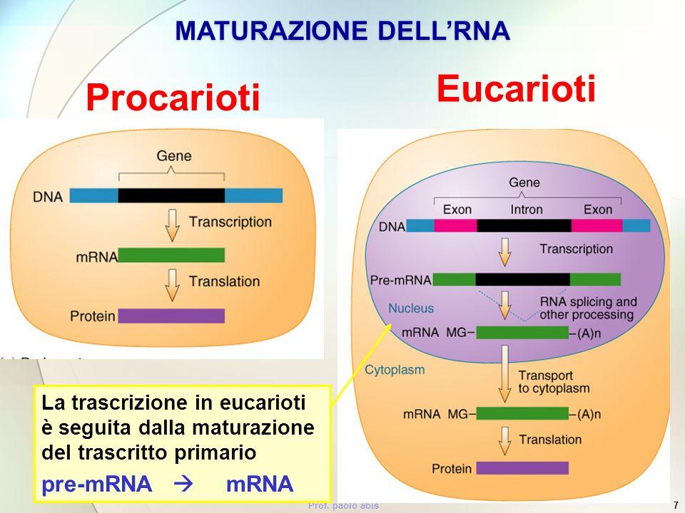 Eucarioti Procarioti MATURAZIONE DELL'RNA pre-mRNA  mRNA