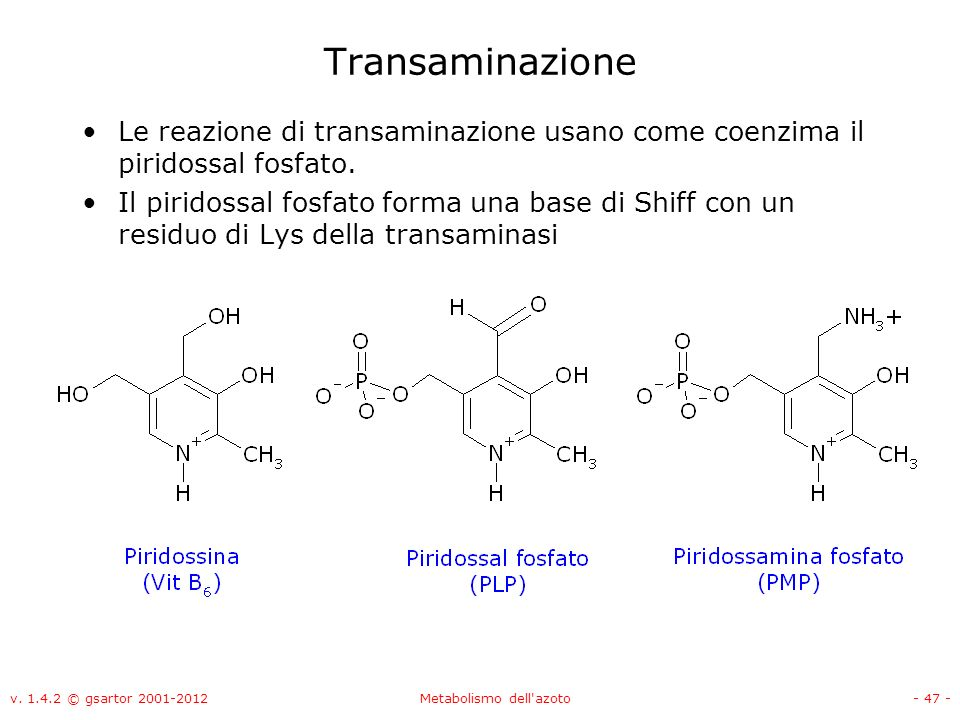 Metabolismo dell azoto ppt video online scaricare for Pianificatore di base online