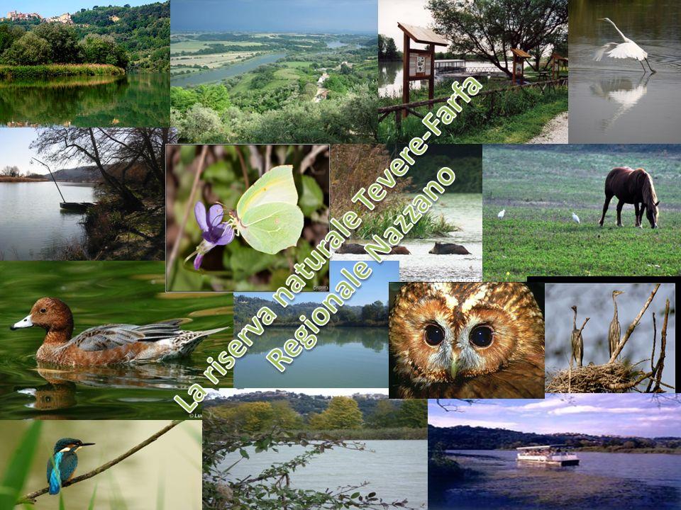La riserva naturale Tevere-Farfa Regionale Nazzano