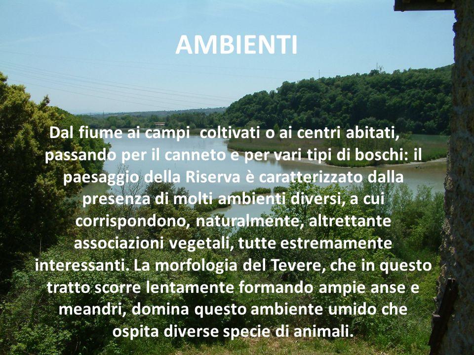 AMBIENTI
