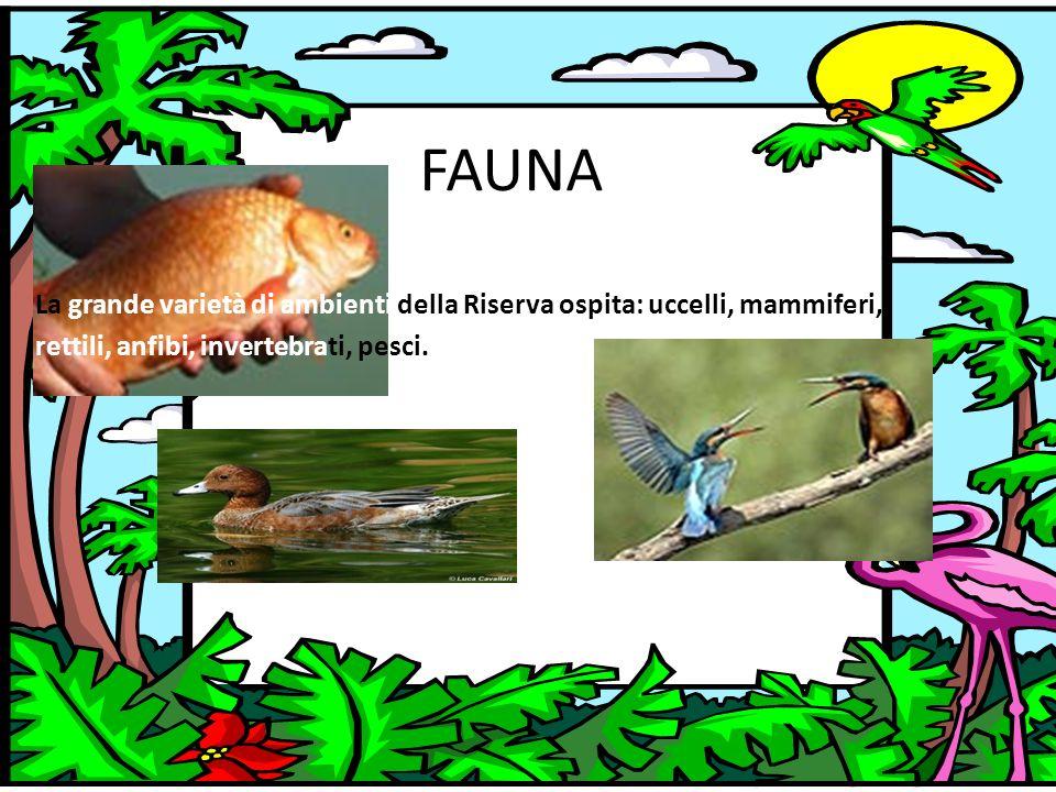 FAUNA La grande varietà di ambienti della Riserva ospita: uccelli, mammiferi, rettili, anfibi, invertebrati, pesci.