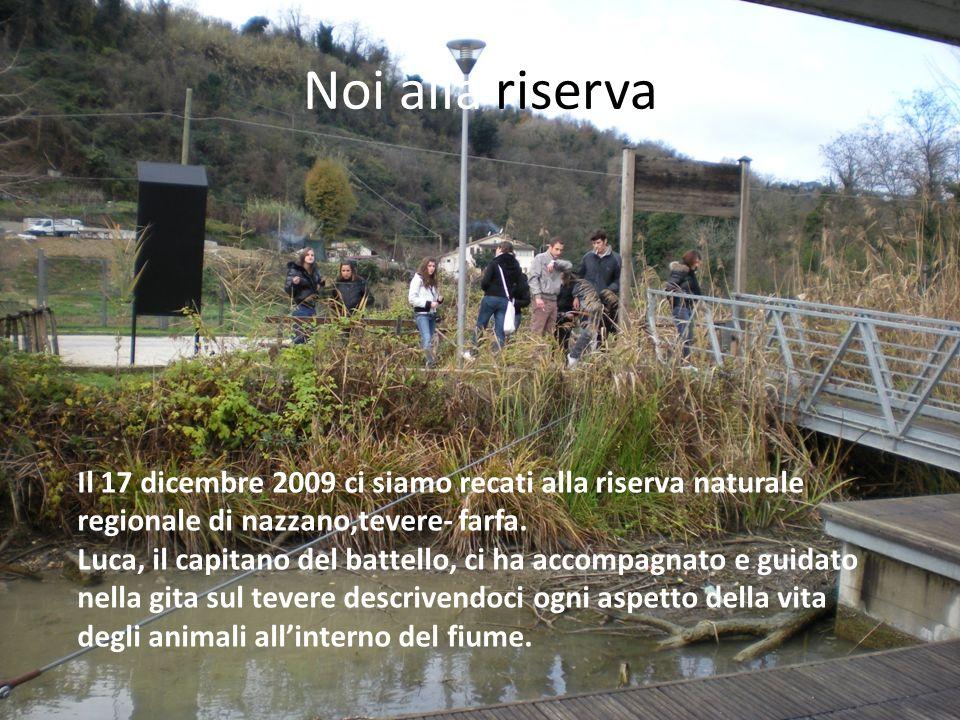 Noi alla riserva Il 17 dicembre 2009 ci siamo recati alla riserva naturale regionale di nazzano,tevere- farfa.