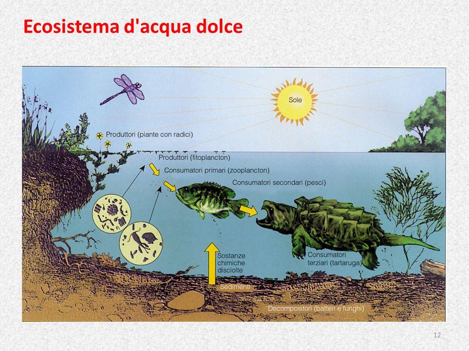 Ecosistema d acqua dolce