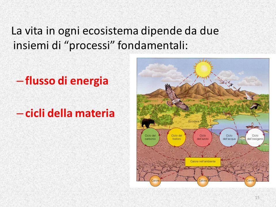 La vita in ogni ecosistema dipende da due insiemi di processi fondamentali: