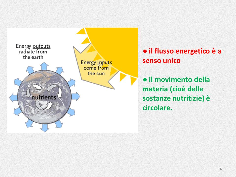 ● il flusso energetico è a senso unico ● il movimento della materia (cioè delle sostanze nutritizie) è circolare.