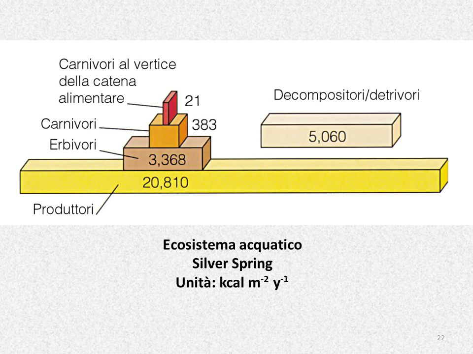 Ecosistema acquatico Silver Spring Unità: kcal m-2 y-1
