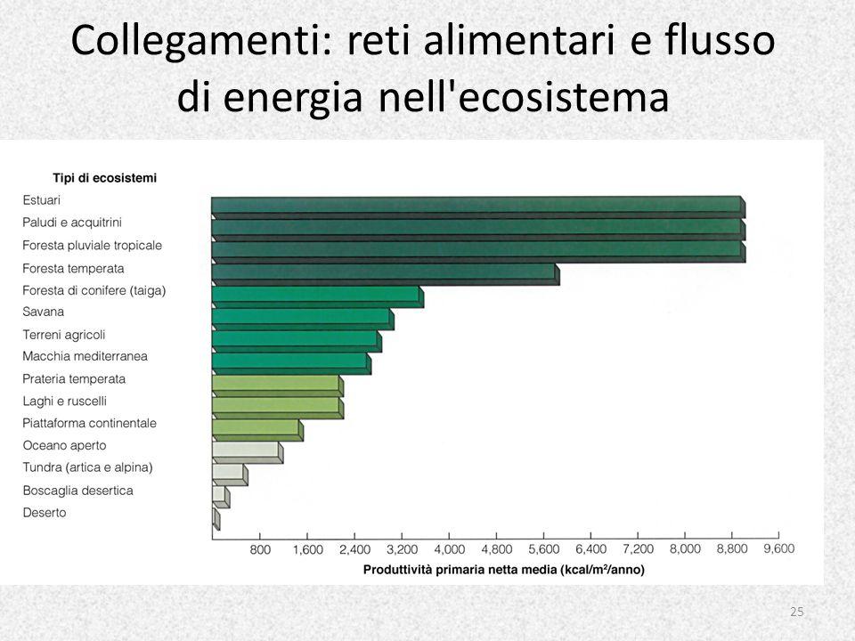 Collegamenti: reti alimentari e flusso di energia nell ecosistema