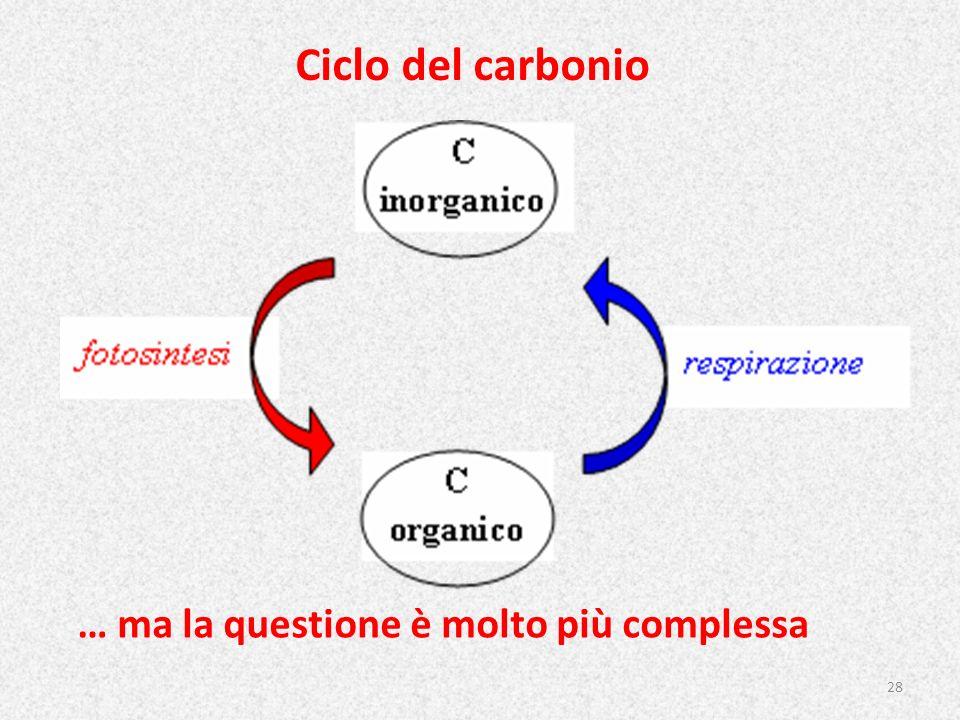 Ciclo del carbonio … ma la questione è molto più complessa