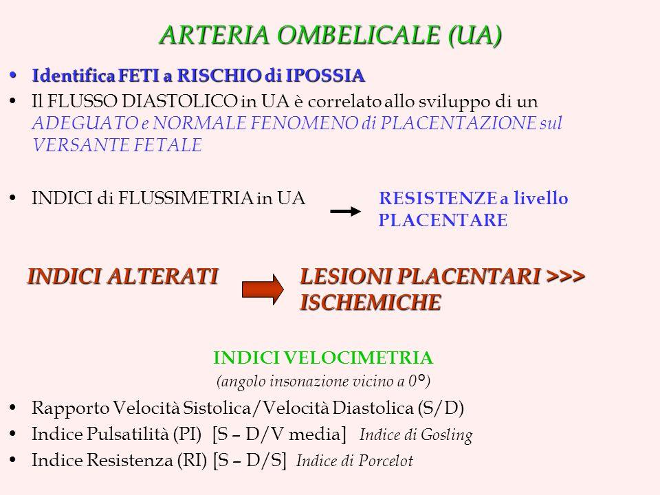 ARTERIA OMBELICALE (UA)