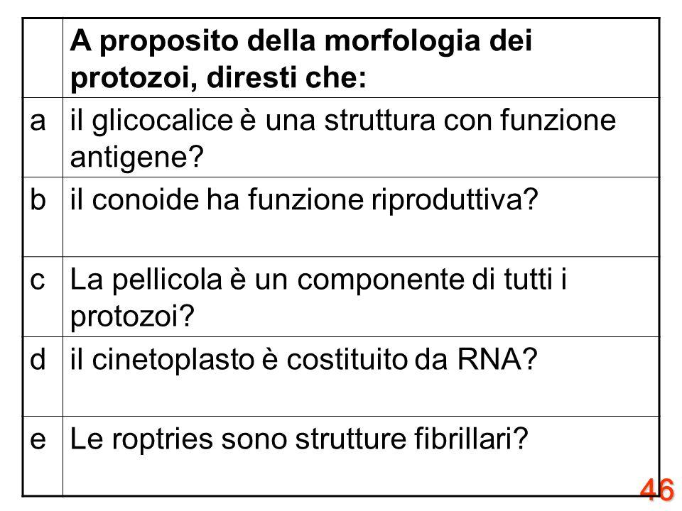 A proposito della morfologia dei protozoi, diresti che: