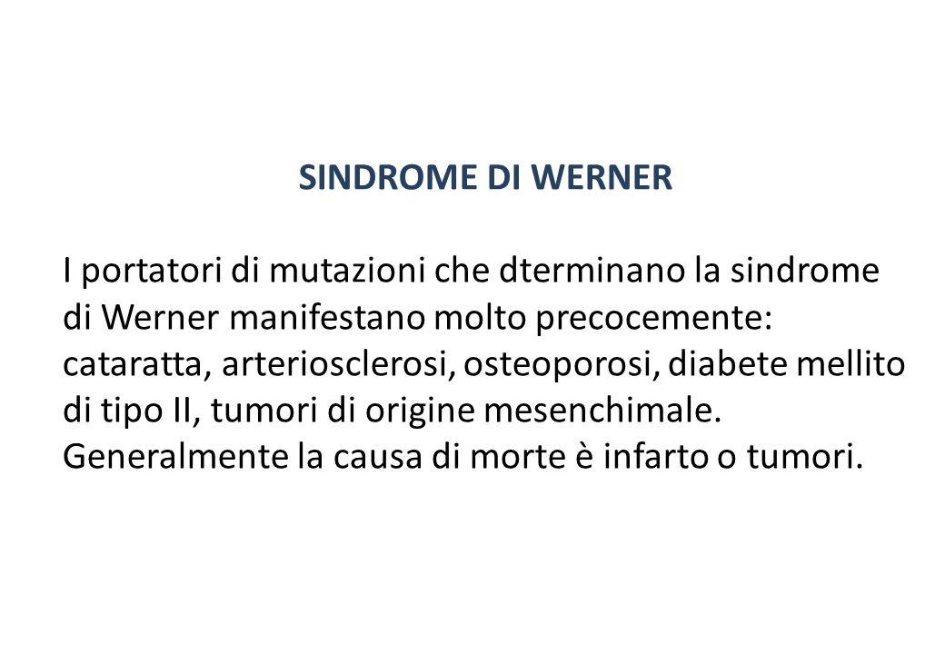 SINDROME DI WERNER I portatori di mutazioni che dterminano la sindrome di Werner manifestano molto precocemente: