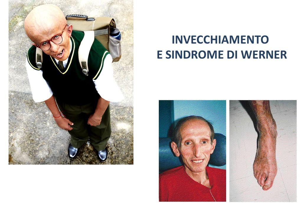 INVECCHIAMENTO E SINDROME DI WERNER